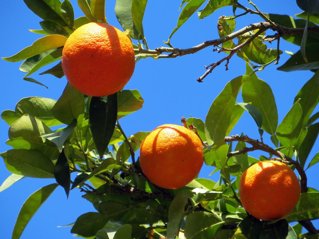 Orangen-Duft