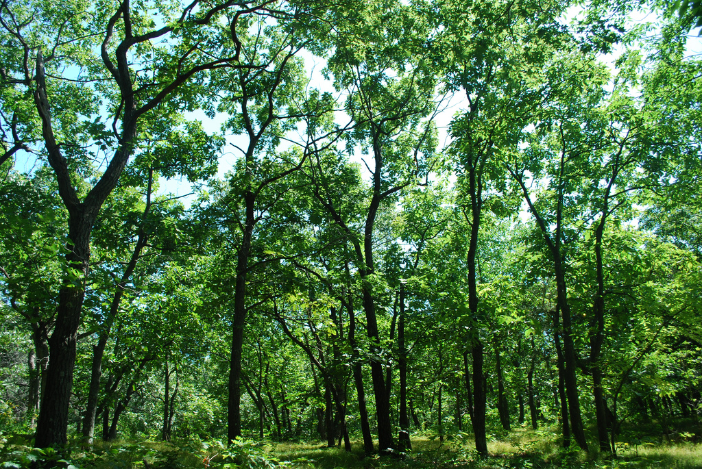 Wald-Duft